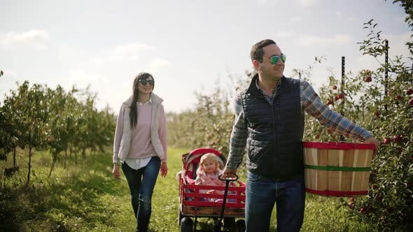 Thumbnail for Family in Apple Orchard on Farm. Dad Takes the Kids in a Cart. Slow Motion, Front View