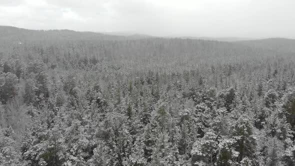Top Down Aerial View of Snow Covered Forest