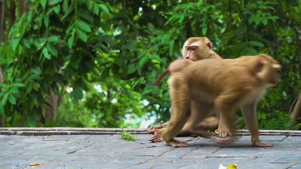 Thumbnail for Monkey Sits in A Jungle Near a Road, Tropical Forest