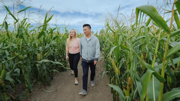 Thumbnail for Young Active Multi-ethnic Couple Having Fun in a Corn Maze