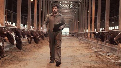 Male Caucasian Farmer Walking in Cowshed