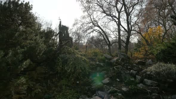 Cover Image for Trees and rocks in a park