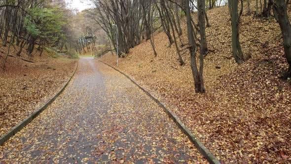 Thumbnail for Autumn park in November 2