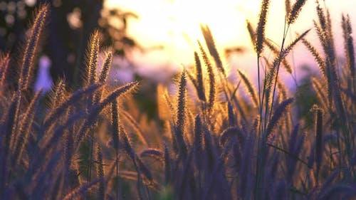 Pays de l'herbe