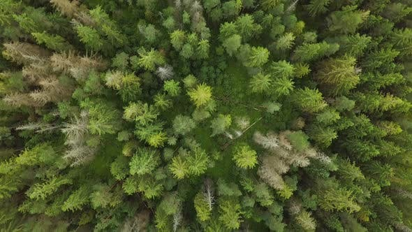 Thumbnail for Bird View Green Forest