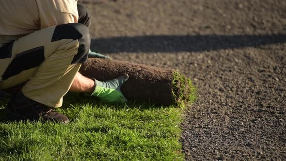 Thumbnail for Natural Grass Installation