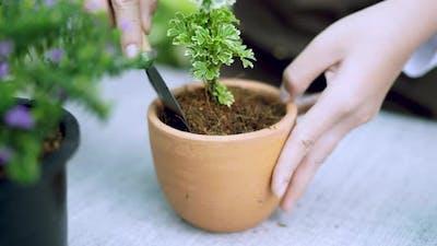 Hand shoveling a plant