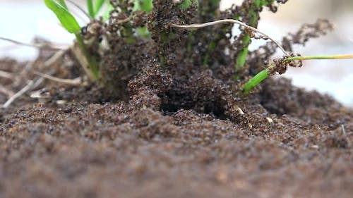 Ant Infestation and Ant Colony