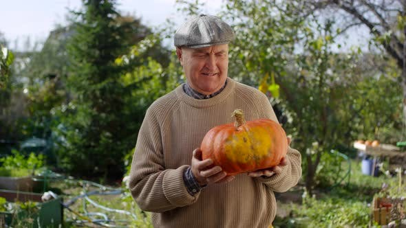 Thumbnail for Proud Elderly Male Gardener Showing Off Large Pumpkin