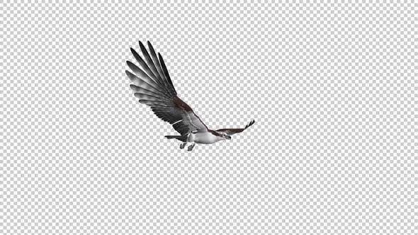 Fish Hawk - Gliding and Flying Loop - Side Angle