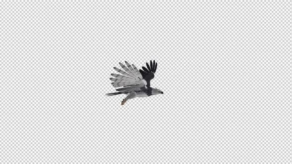 Thumbnail for Harpy Eagle - Flying Loop - Side View