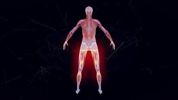 Female Musculature System V1 4k
