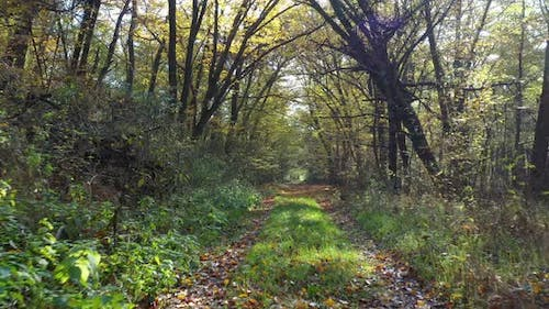 Amazing Forest Path In November