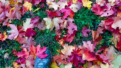 Autumn Leaves Underfoot