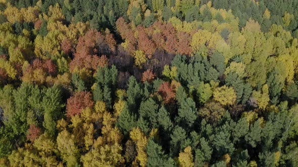 Thumbnail for Aerial Footage of Colorful Forest in Autumn Season. Yellow and Green Trees