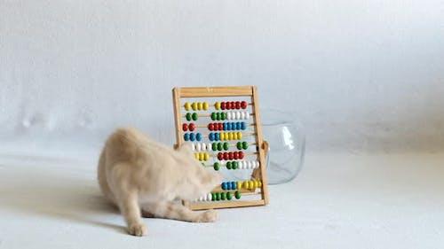 Ein kleines cremefarbenes Kätzchen spielt mit hölzernen Abakus auf einem weißen Tagesdecken. zurück zur Schule
