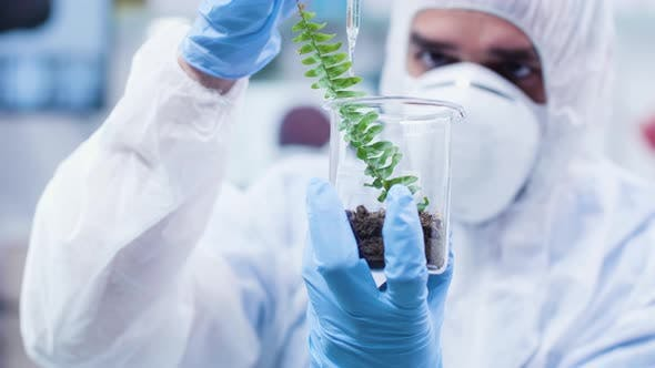 Thumbnail for Researcher Pouring GMO on Plants
