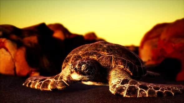 Thumbnail for Sea Turtle at Beach Sand