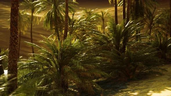Oase mit Palmen in der Wüste