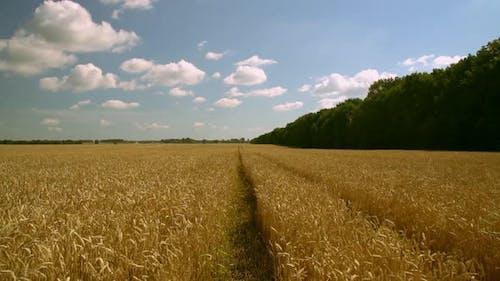 Landschaft in der Sommersaison