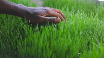 Closeup of a Hand on the Grass