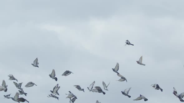 Cover Image for Flock of birds flying in the sky