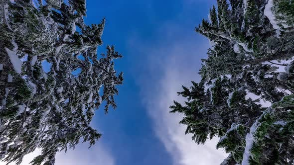 Cover Image for Blue Sky And Cloud Movement Timelapse Up Angle Between Snowy Trees
