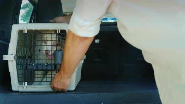 Thumbnail for The Driver Loaded Into the Trunk of the Car Cage with Puppies. Transportation and Animal Delivery