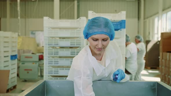 Thumbnail for Candy Factory. Factory Worker Checking Packing Machine
