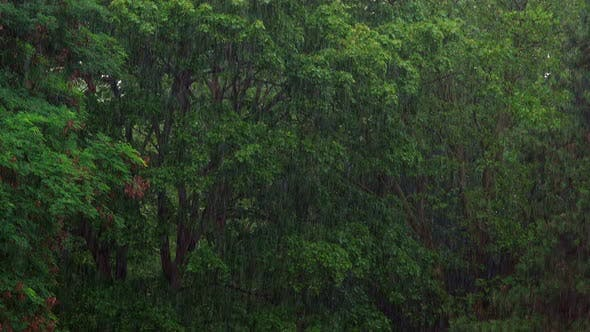 Thumbnail for Rainy Day In Forest