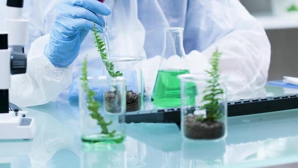 Thumbnail for Chemist Making Experiments with GMO on Plants