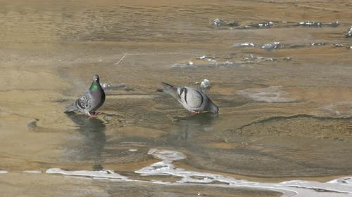 Birds Drinking Water From Frozen River on Water Surface Ice