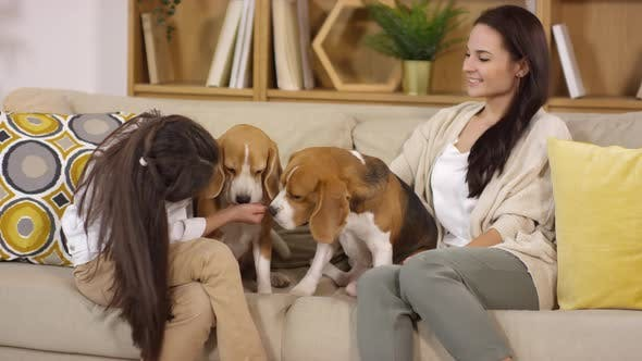 Mother and Daughter Petting Two Beagle Dogs on Sofa