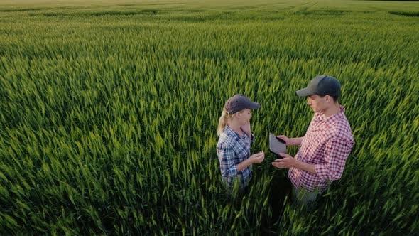 Two Farmers Communicate in a Field of Wheat