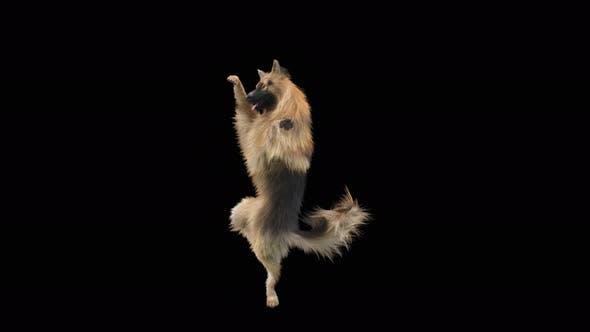 Thumbnail for Dog Dance 4K