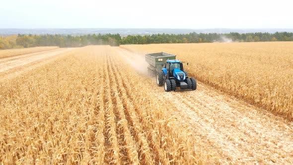 Luftaufnahme eines Traktors mit Anhänger, der Maisfracht während der Ernte entlang des Feldes transportiert