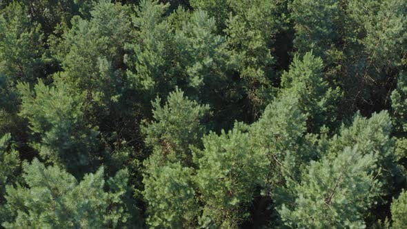 Thumbnail for Top View On Trees In The Forest