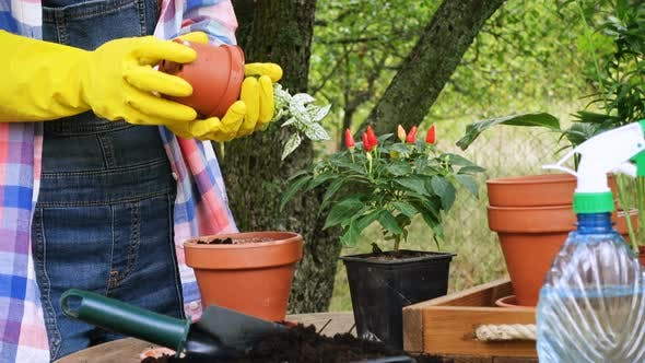 Thumbnail for Woman Hands Planting Flowers