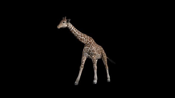 Thumbnail for Giraffe Walk Front
