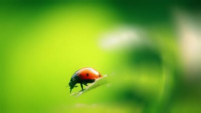 ladybird insect on natural spring background