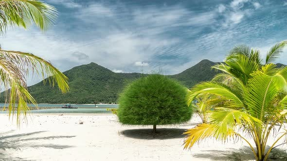 Thumbnail for Unusual trees on Malibu sand beach on mountain background in Koh Phangan island, Thailand