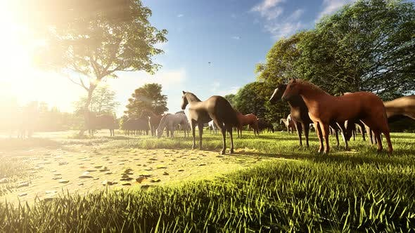 Thumbnail for Wild Herd Horses Grazing At Sunset