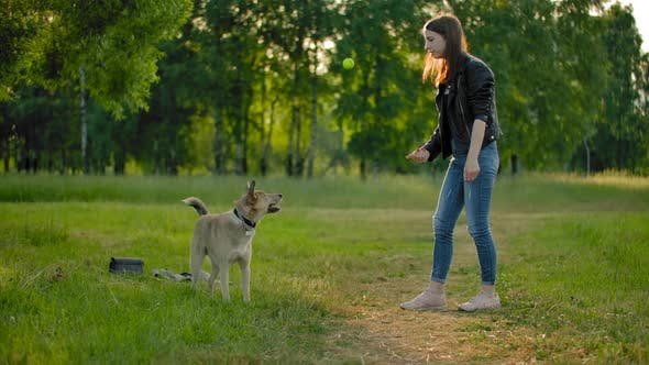 Young Woman, Throws a Tennis Ball To Her Dog To Cath It in the Air. A Fun Game with a Pet.
