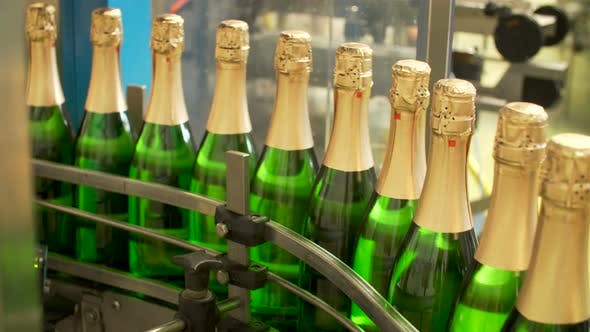 Cover Image for Champagne Bottles on Factory Conveyor Belt