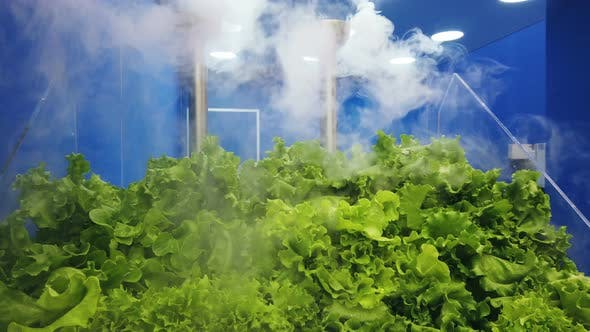 Thumbnail for Cooling and Moisturizing Plant for Fruits and Vegetables