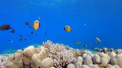 Sea Water Coral Garden