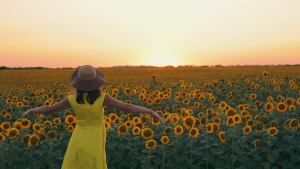 Woman at Sunset in a Field of Sunflowers Raises Her Hands Up Holding a Hat in Her Hand and Putting