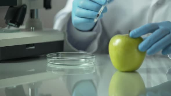 Thumbnail for Lab Assistant Injecting Apple With Biomaterial to Select New Kinds in Future