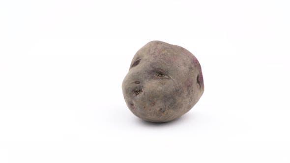 Thumbnail for One Half of Vitelotte Potato