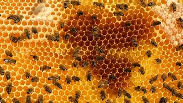Thumbnail for Honey